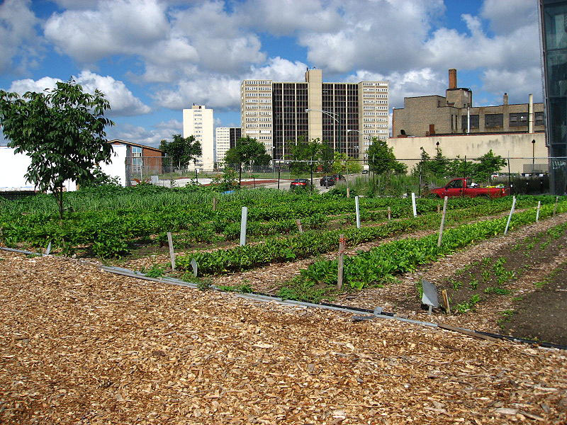 Detroit-Urban-Farm-1_inhabitat