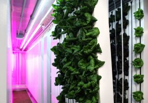 Square Roots Urban Farm - Imaged credited to BusinessInsider